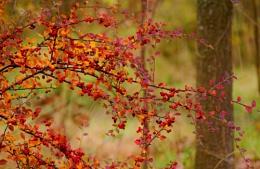 Autumnal image.