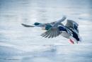 In Flight. by kuvailija