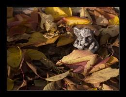 Autumn Gargoyle