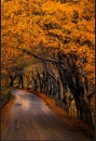 Autumn Passage by phiggy