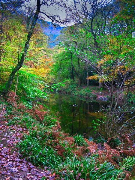 Fingle Bridge Beauty by MadVillPics