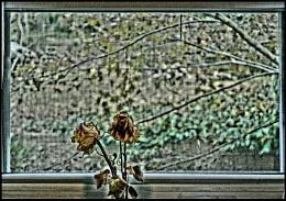 Eternal Rose in Autumn