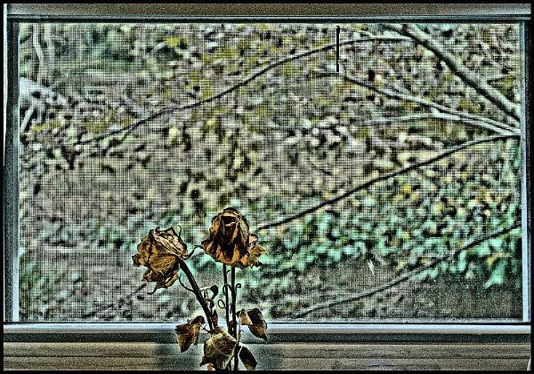 Eternal Rose in Autumn by DonSchaeffer