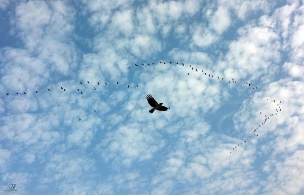 The Birds by SHR