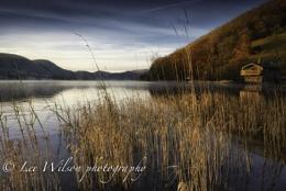 ullswater reeds