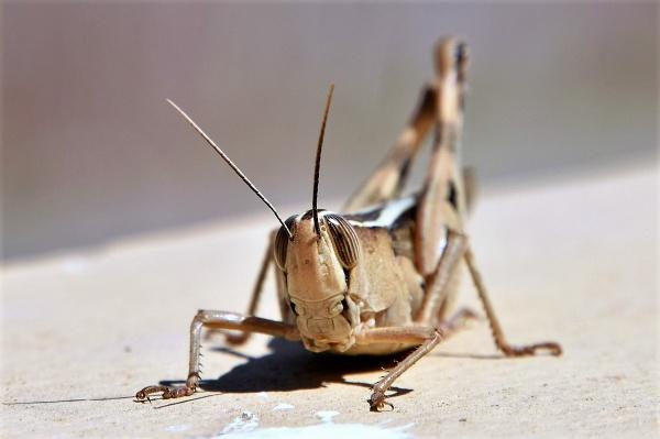 Bug Eyed by geoffgt