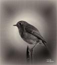 Robin by Big_Beavis