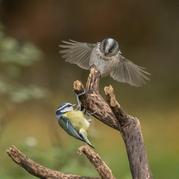 The Intruder by photographerjoe