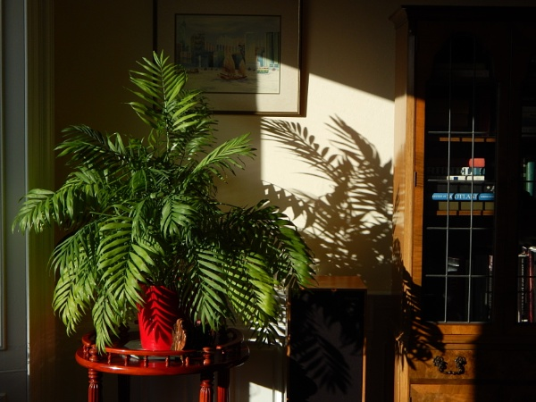 Home Fern Shadow by digital_boi