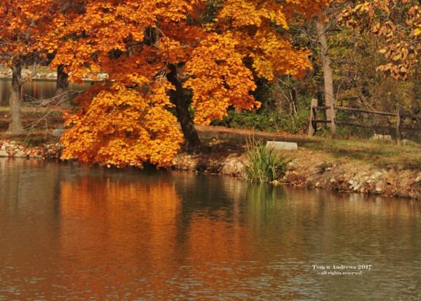 Fall Path by f4fwildcat