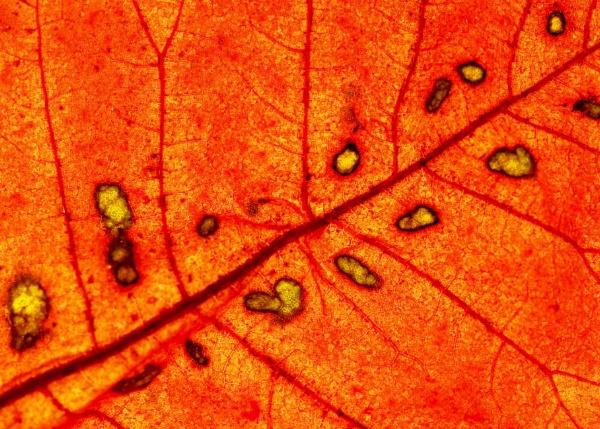 Leaf decay by nclark