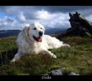 Stella by jasonrwl
