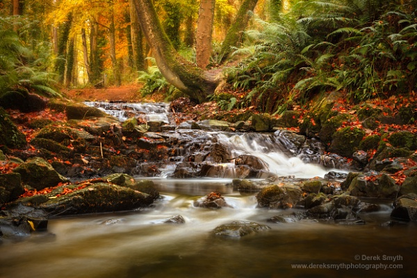 Drumleck River In Autumn by Porthos