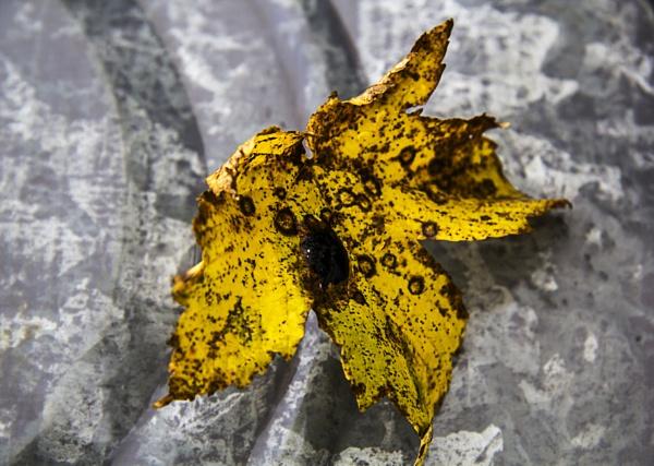 Leaf on Bin Lid (2) by Irishkate