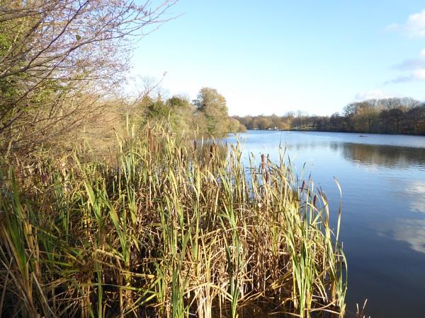 Langold Lake - Fisherman\'s View. by Gypsyman
