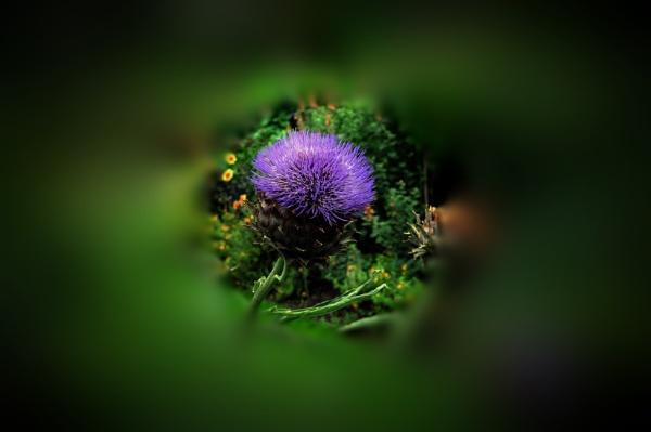 purple head by williamsloan