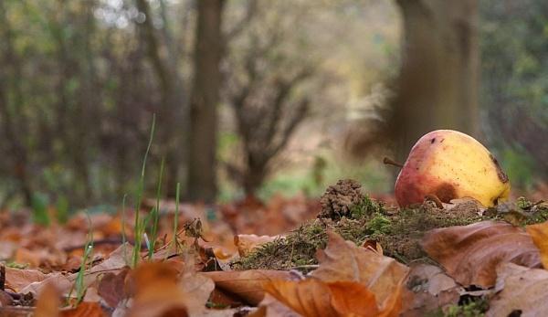 Autumn fall by georgiepoolie