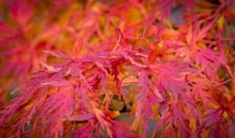 Autumnal 3