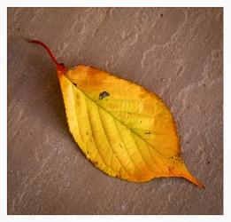 Autumnal 5