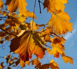 Autumnal 6