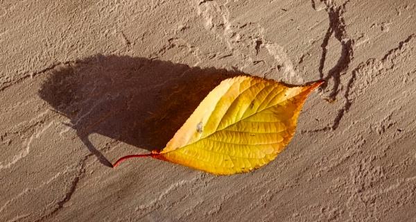 Autumnal 7 by Nikonuser1