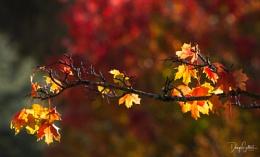 Autumnal Glory...