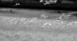 Disturbed Seagulls