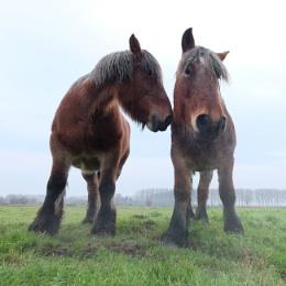 Horses whisper - original