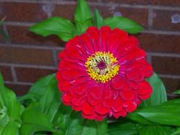 Photo : Flower
