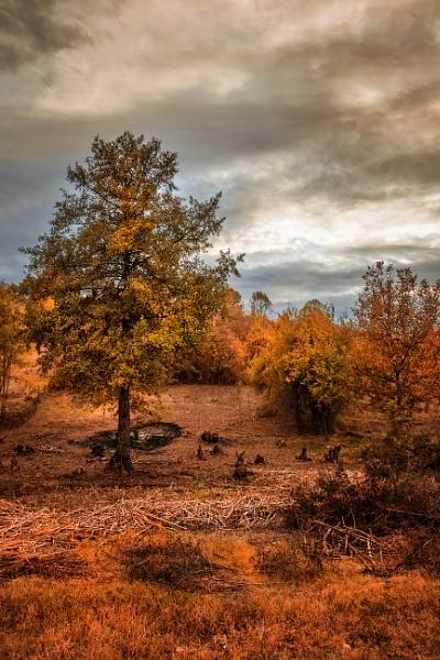 Autumn color by Rucsandra