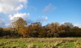 Autumn in Cheshire