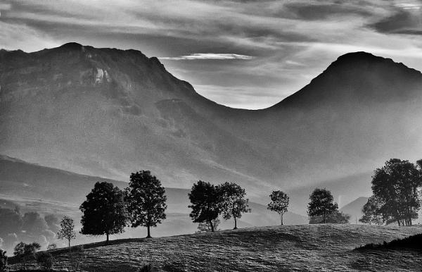 Tree Line by Zydeco_Joe