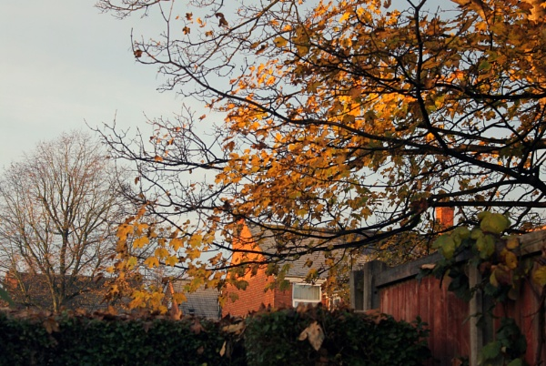 Early morning sunshine by helenlinda