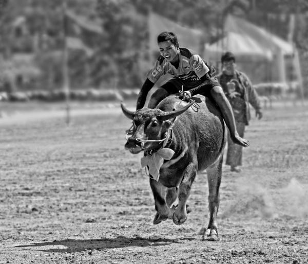 Buffalo Rider by DonMc