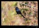 Tsavo West National Park #19 by SteveMoulding