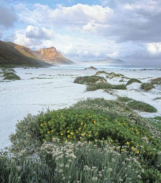 Misty Cliffs Scarborough by hwatt