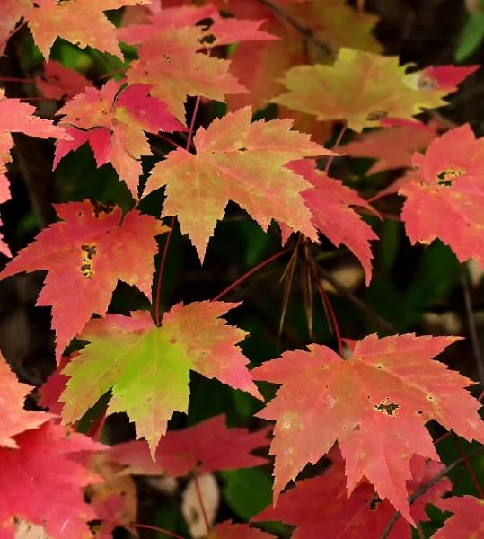Autumn colors by jbsaladino