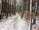 In The Winter Woods by headskiesfly