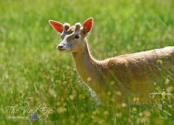 Deer by MartinWait