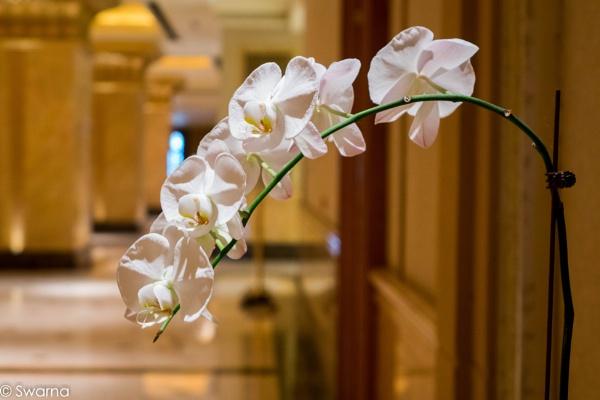 Floral Art by Swarnadip