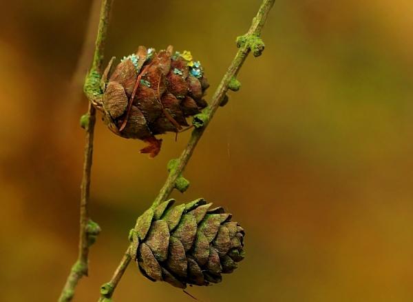 Autumn image 4