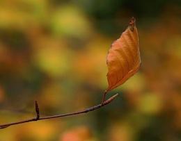 Autumn image 5