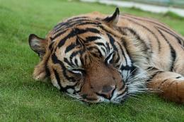 Let sleeping tigers lie.
