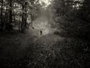 Misty Morning Hop by kaybee