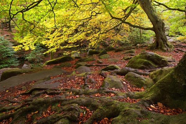 Autumn Bling by Trevhas