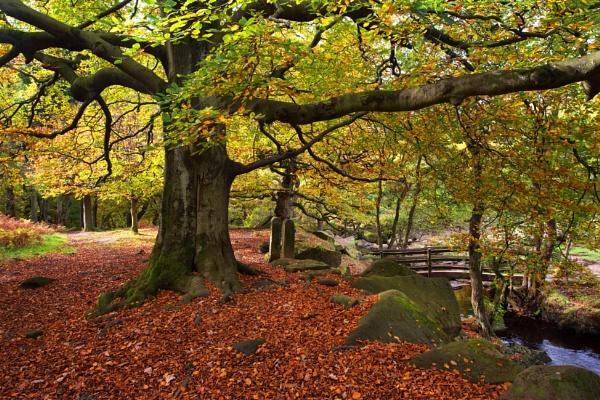 Autumn Pathway by Trevhas