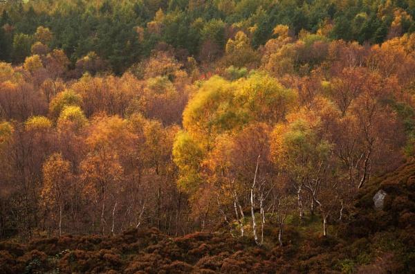 Autumn Fusion by Trevhas