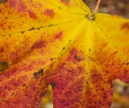 A little Autumnal colour