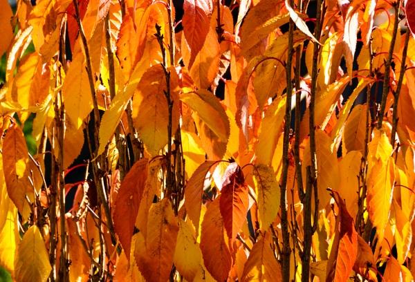Autumnal Colour by Nikonuser1