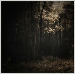 The deep wood